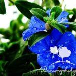 10 loại hoa ban công bạn nên trồng vào mùa hè