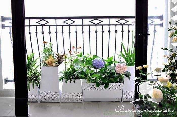 trang trí ban công chau hoa