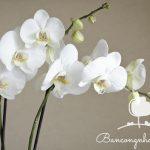 Ban công đẹp với hoa phong lan