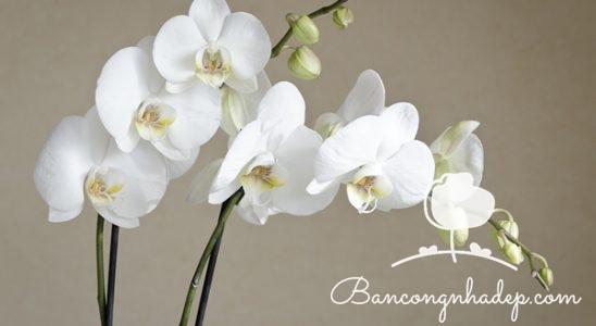 ban công đẹp với hoa phong lan 01