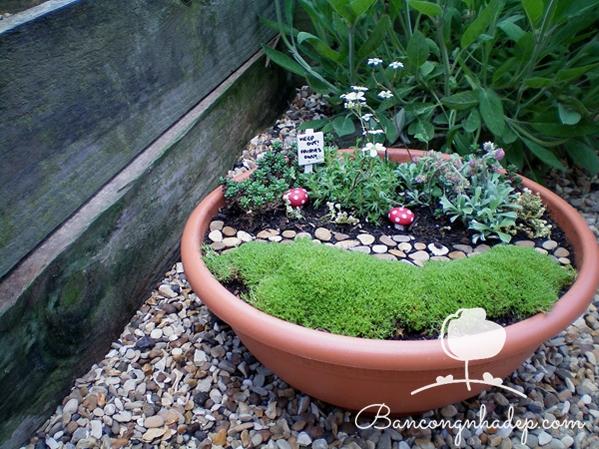 khu vườn trong chậu nhỏ