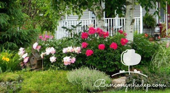 khu vườn trên ban công