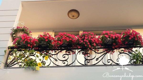 trang trí ban công bằng hoa