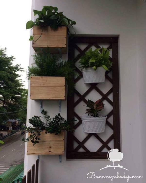 chậu gỗ treo tường