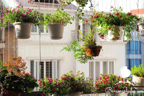 trồng cây như thế nào cho phù hợp với hướng ban công