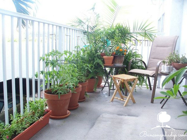 trồng cây phù hợp với hướng ban công