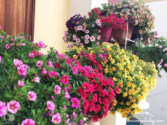 Các loài hoa dễ trồng và sống lâu phù hợp với mọi ban công chung cư