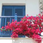 Các loại hoa trồng ban công chịu nắng cực tốt