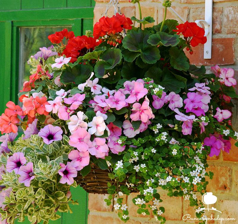 Cách trang trí ban công đẹp bằng giỏ hoa