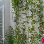 Các loại cây trồng ban công dễ sống