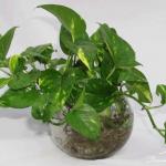 Cây trồng trong nhà không cần ánh sáng tốt cho sức khỏe