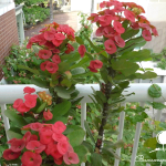 Những loại cây phong thủy nên chọn trồng ở ban công.