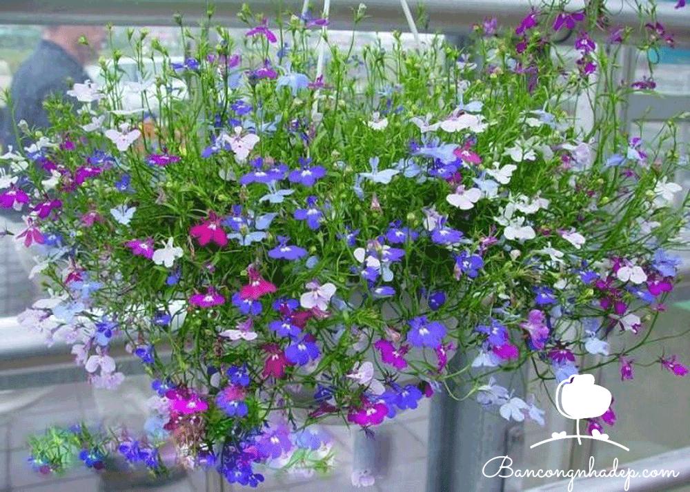 Các loài hoa dễ trồng