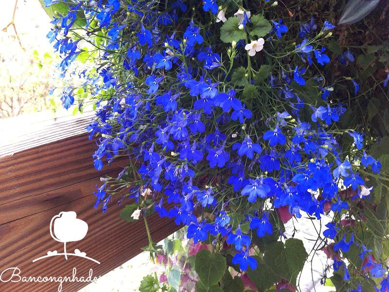 Các loài hoa sống lâu phù hợp với mọi ban công