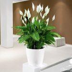 Các cây thanh lọc không khí bạn nên trồng trong nhà.