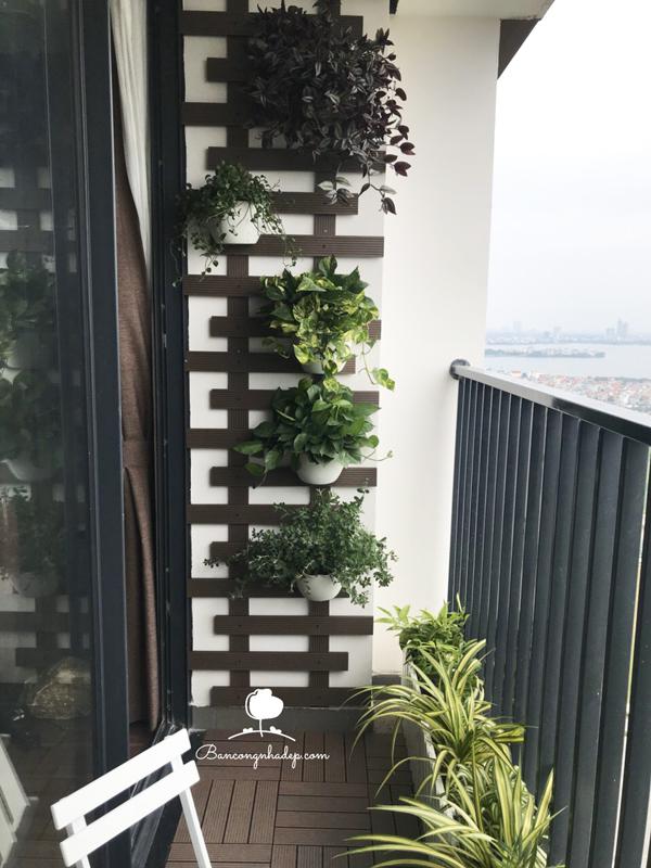 cách trồng ban công đẹp