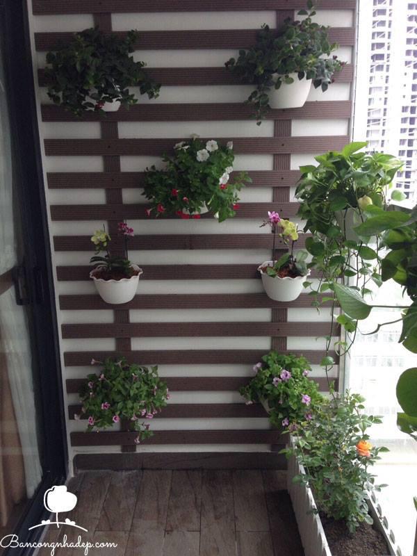 hoa trồng ban công đẹp chung cư